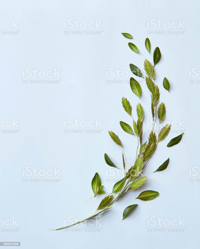 Floral composition with little green leaves stock photo