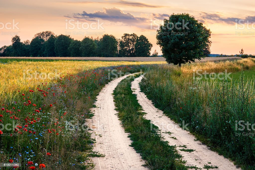 floral country road stock photo