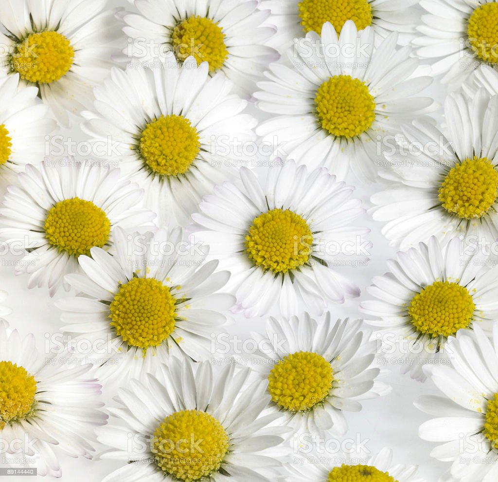 floral daisy flower background royalty-free stock photo