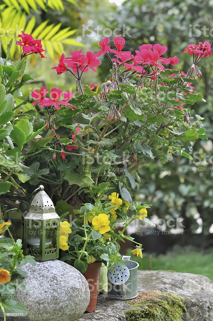 floral decoration in a garden stock photo