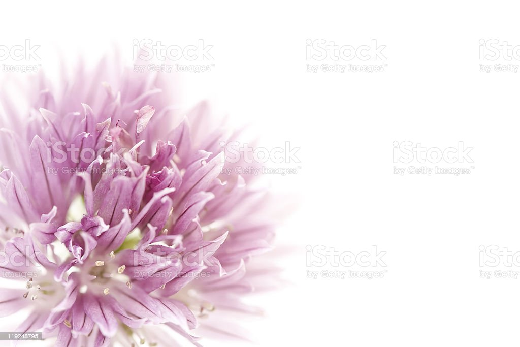 Floral design royalty-free stock photo