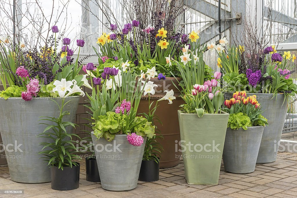 Floral display stock photo