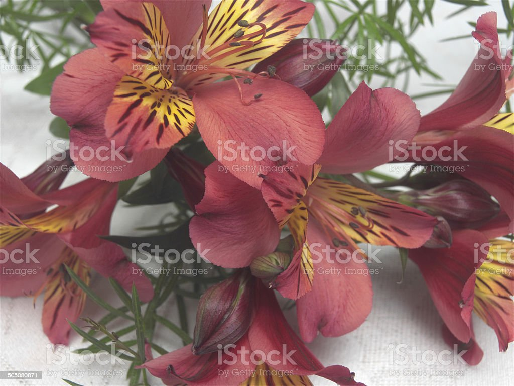 Floral Feast royalty-free stock photo