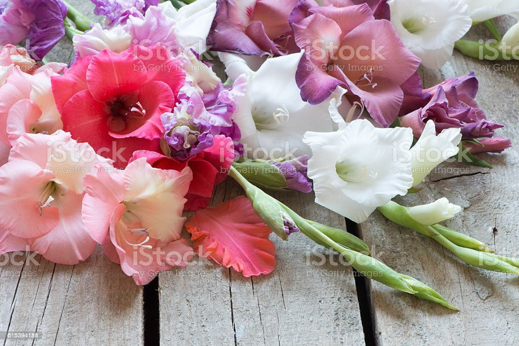Floral frame with colorful gladiolus stock photo