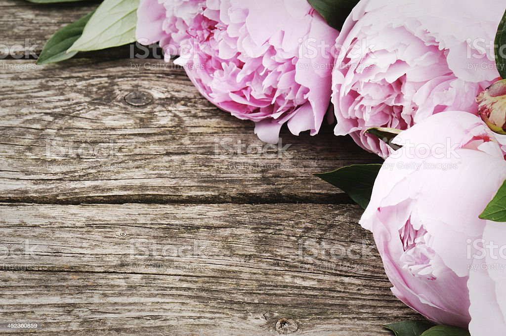 Floral frame with pink peonies stock photo