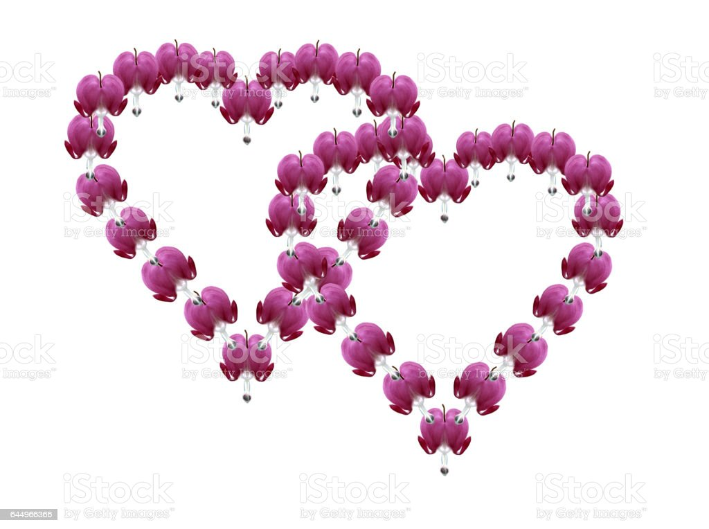 Floral heart; Dicentra; spectabiles stock photo