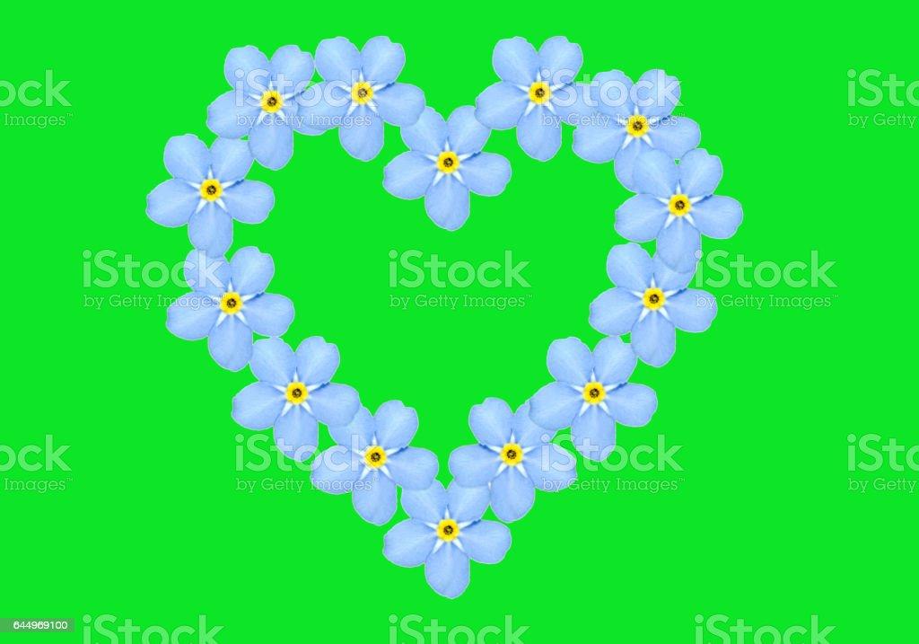 Floral heart, Myosotis stock photo