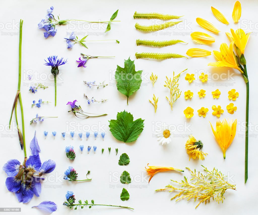 Floral knolling stock photo
