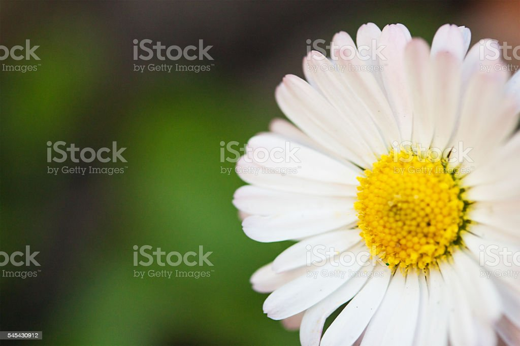 Floral nature daisy abstract background in green and yellow stock photo