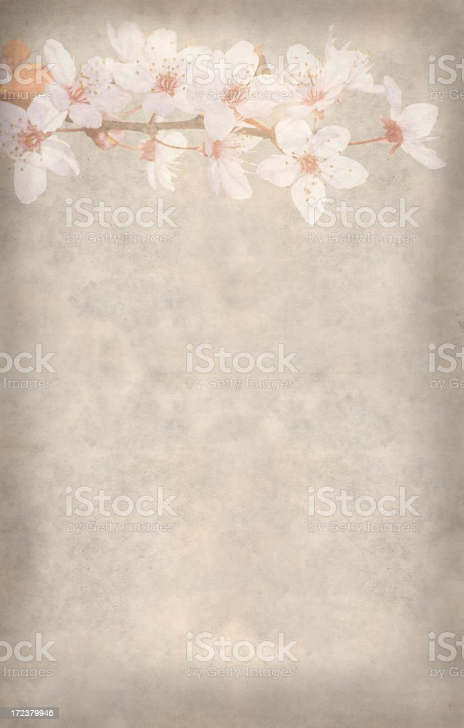 floral old paper background  XXXXL royalty-free stock photo