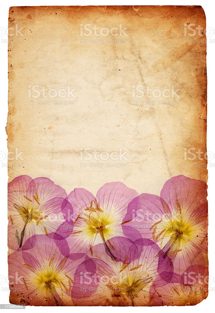 Floral Paper XXXL royalty-free stock photo