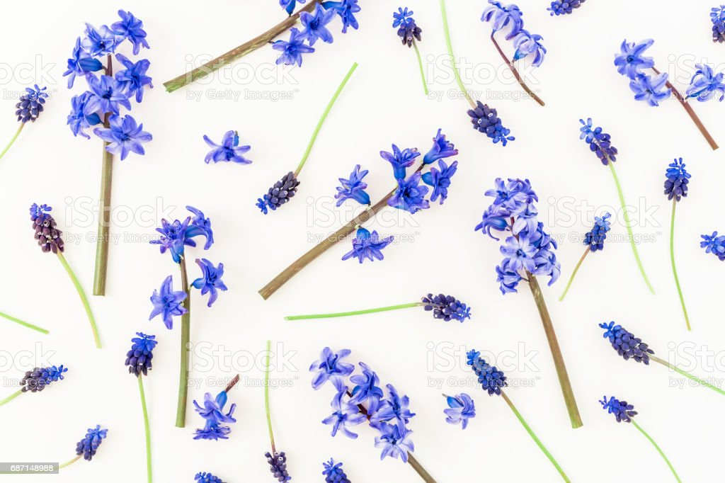 Floral pattern made of blue flowers on white background. Flat lay, top view. stock photo