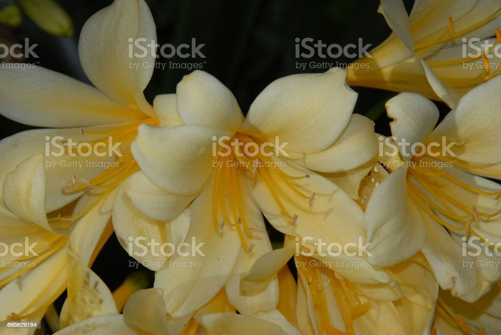 Floral perfection stock photo