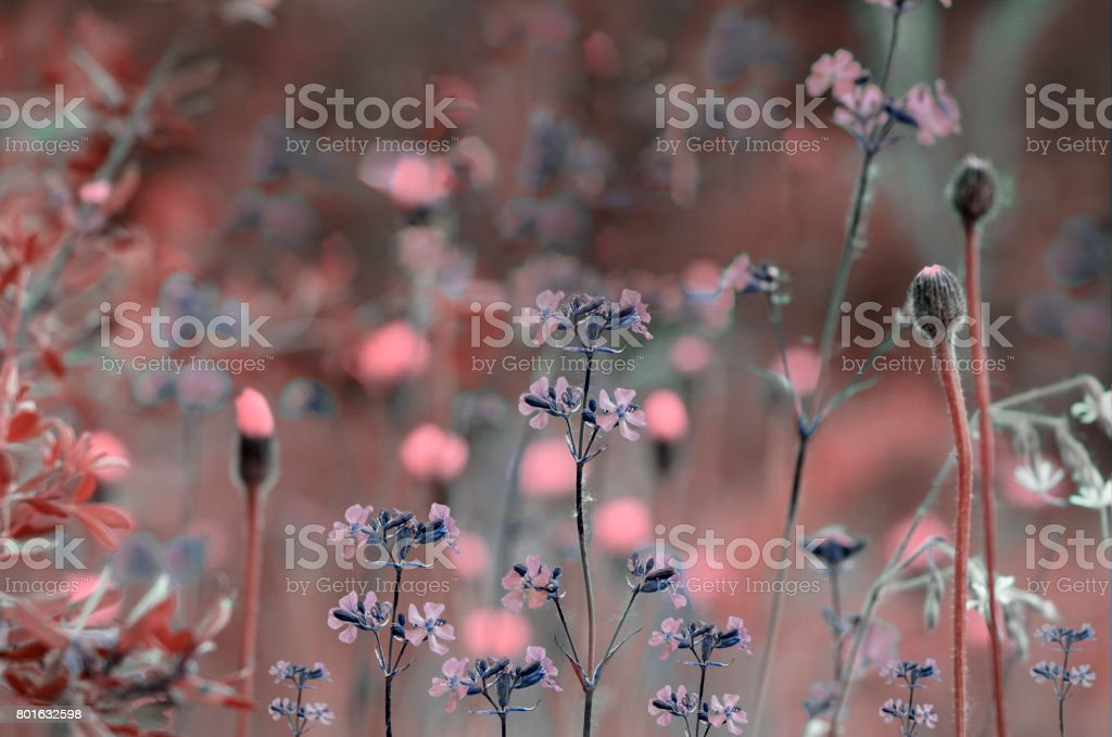 Floral red-pink background. Wildflowers on a  bokeh background. Close-up.  Soft focus    Nature. stock photo