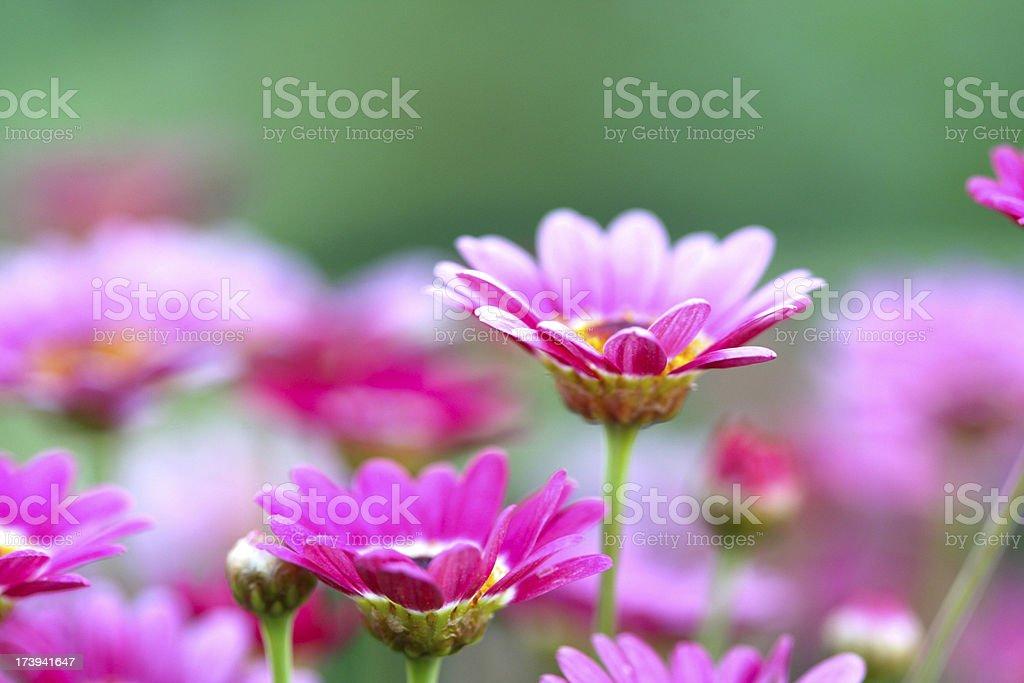 Scena floreale foto stock royalty-free
