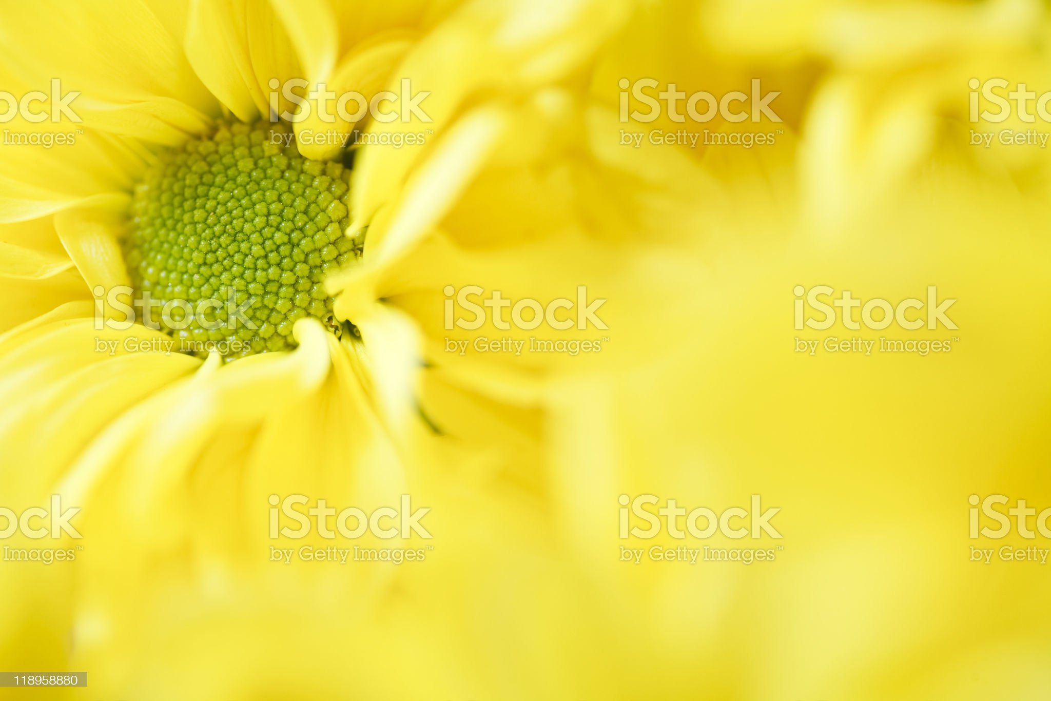 Floral template royalty-free stock photo