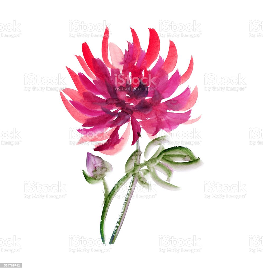 floral watercolour dahlia. red aster, chrysanthemum pattern. fal stock photo