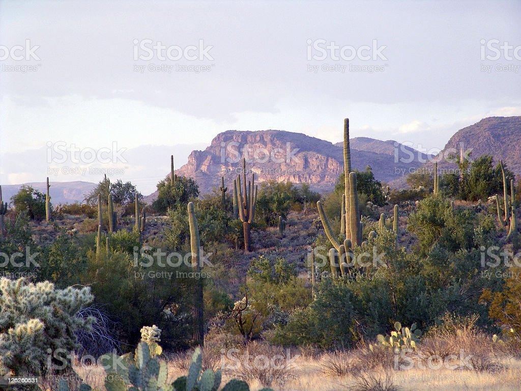 Florence, Arizona desert royalty-free stock photo