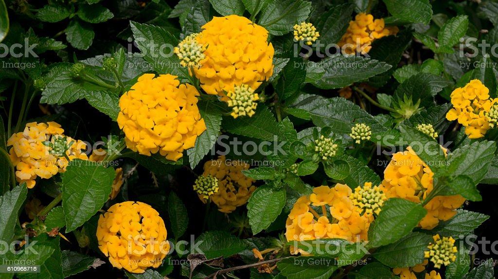 Flores amarelas stock photo