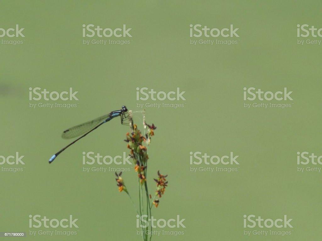 Flores e insetos brasileiros stock photo
