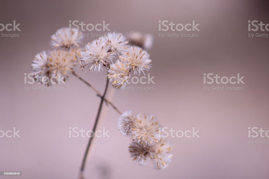 Flores en cruz stock photo