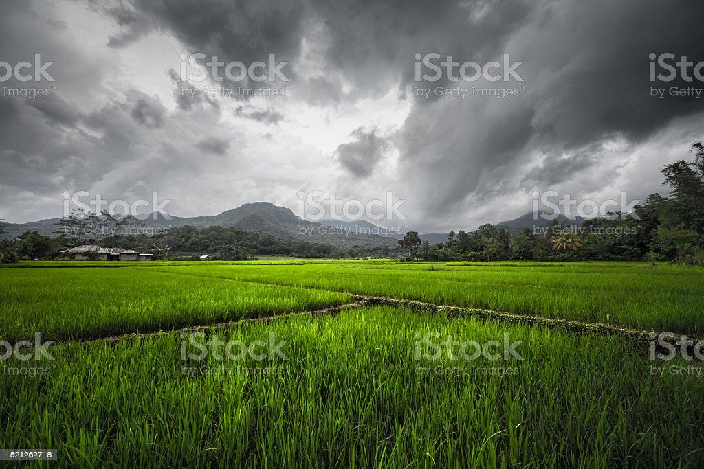 Flores, Indonesia stock photo