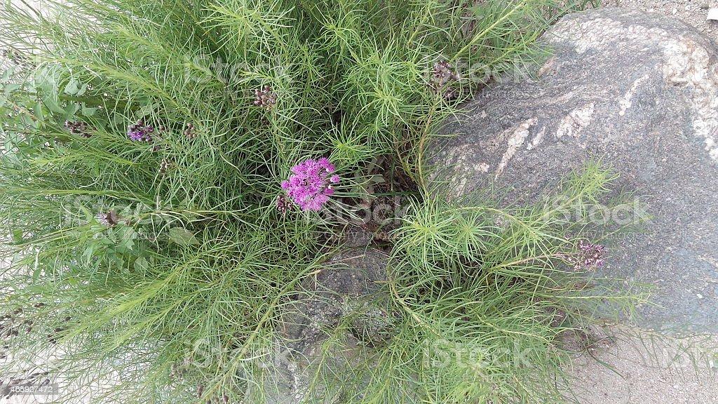 Flores silvestres stock photo