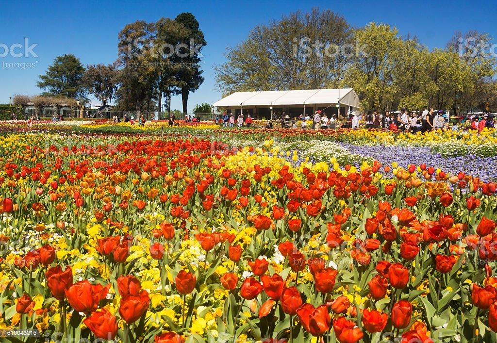 Floriade Canberra stock photo