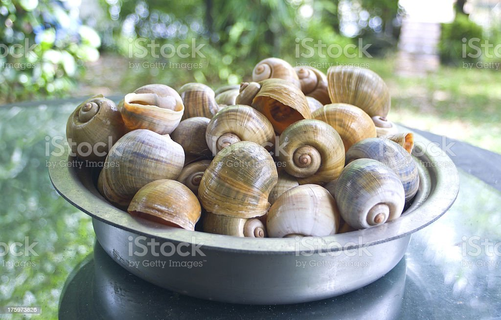 Florida Apple Snail Shells In A Silver Bowl stock photo
