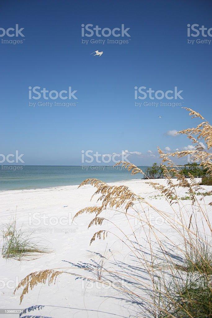 Florida Beach stock photo