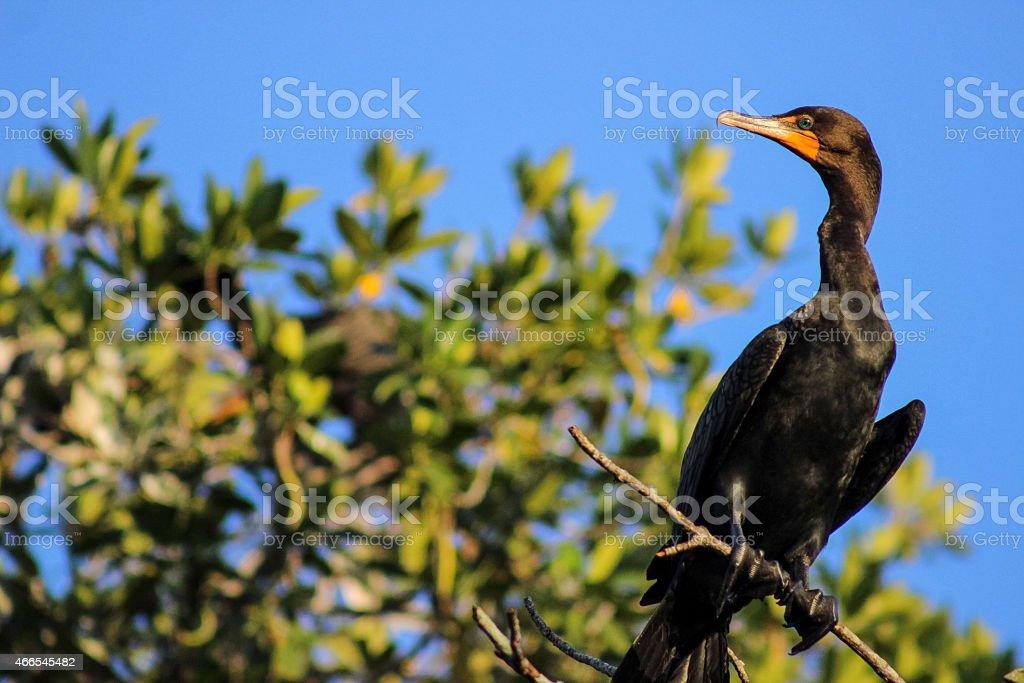 Florida Bird stock photo