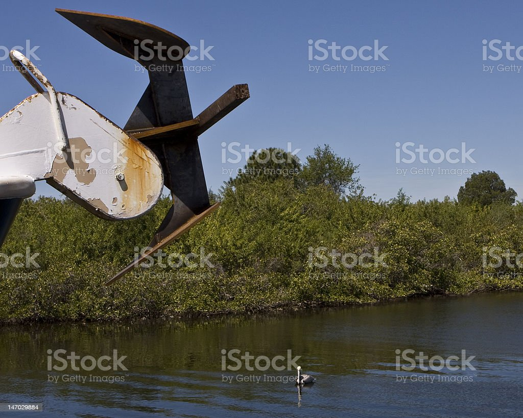 Florida Brown Pelican stock photo