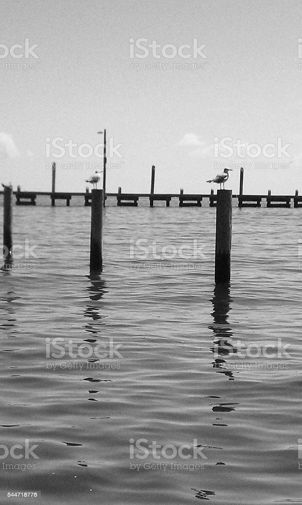 Florida Day watching the seagulls Fishing stock photo