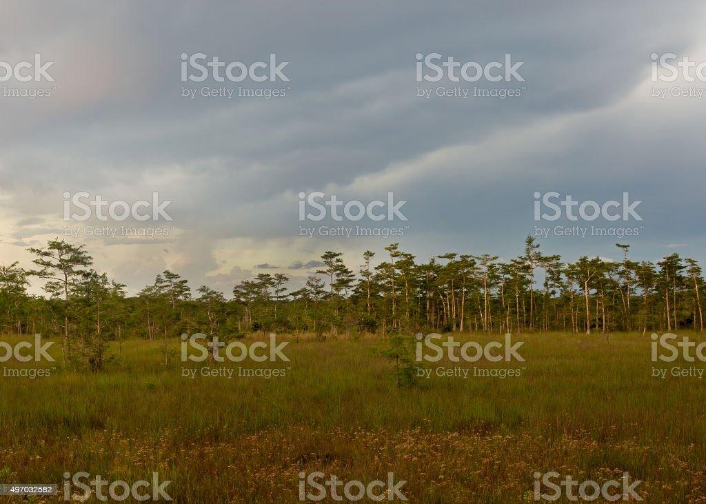 Florida Everglades at Dusk stock photo