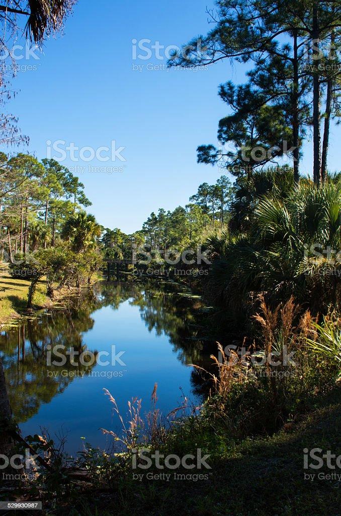 Florida Everglades stock photo