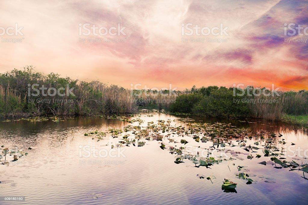 Florida Everglades sunset stock photo