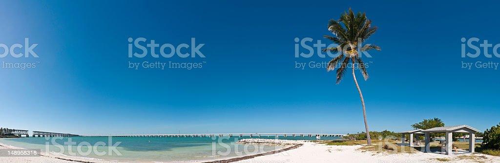 Florida Keys palm tree white sands stock photo