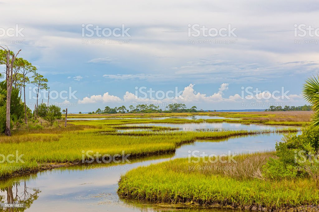 Florida Landscape of Marshland stock photo
