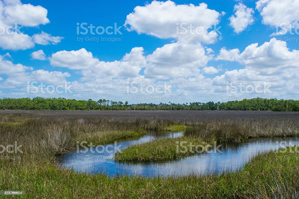 Florida River of Grass stock photo