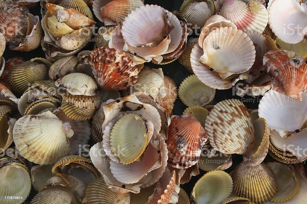 Florida Seashell Collage stock photo