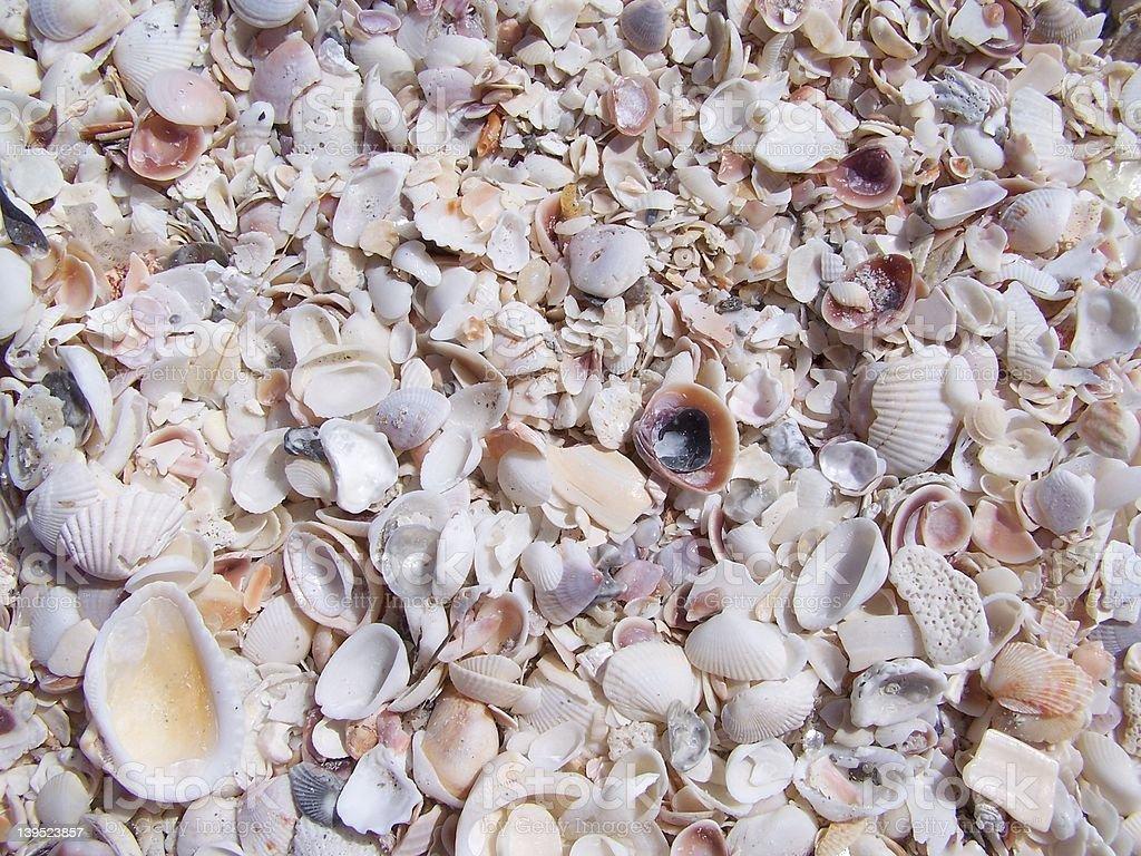 Florida Seashells royalty-free stock photo