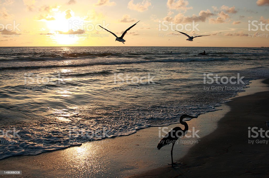 Florida sunset royalty-free stock photo