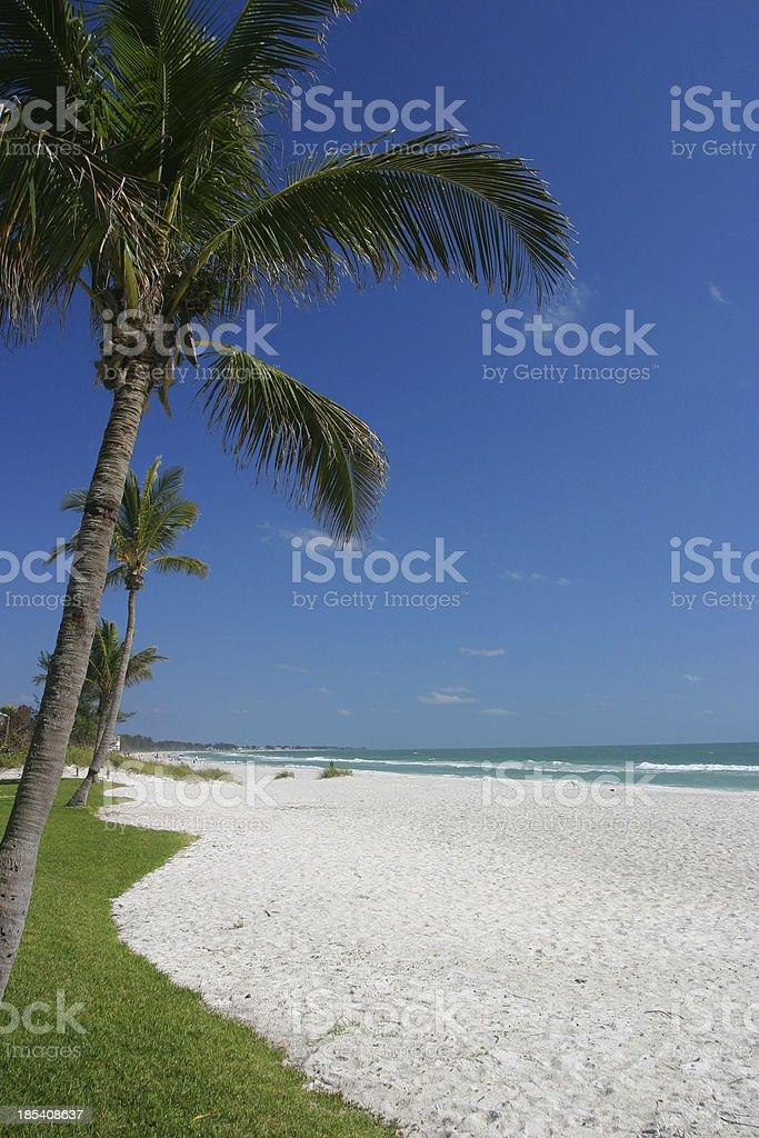 Florida Vacation  Beach Palm stock photo