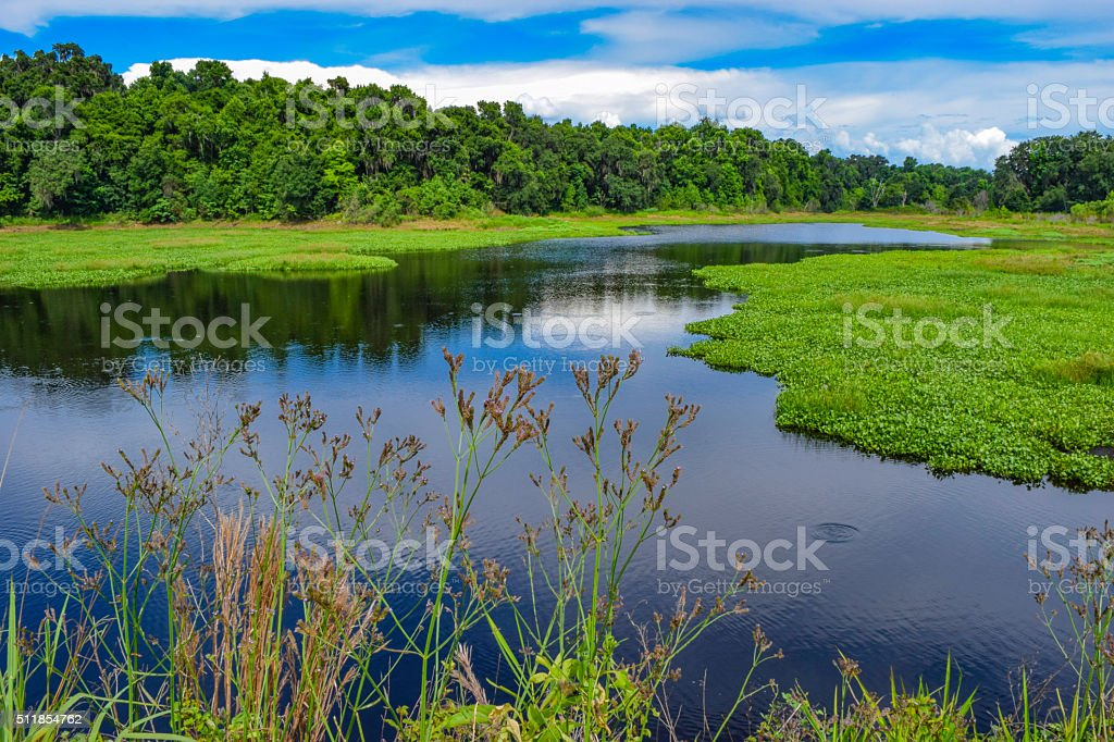 Florida Wetlands stock photo
