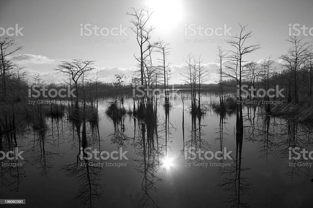 Florida Wetlands Sunrise royalty-free stock photo