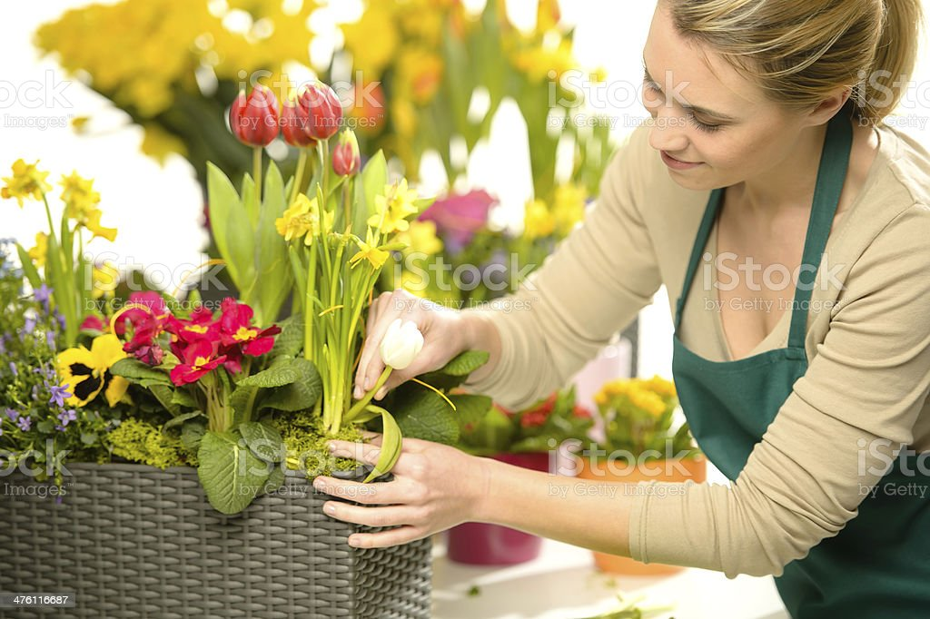 Florist arrange spring flowers colorful stock photo
