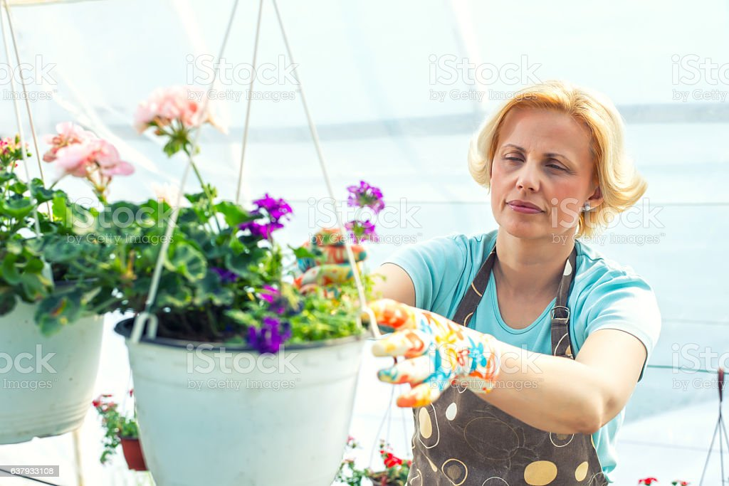 Florist holding flowers in a greenhouse stock photo
