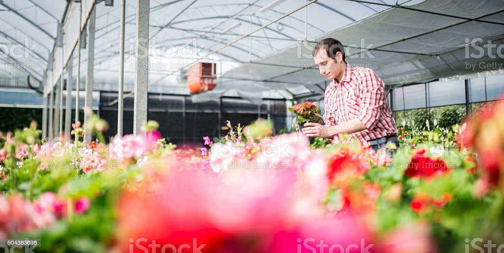 florist man arranging the flowers stock photo