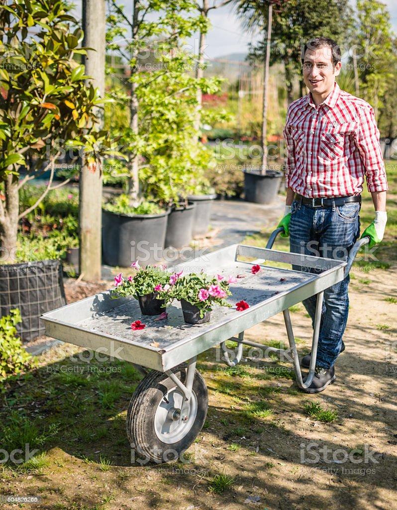 florist owner with wheelbarrow in a plant nursery stock photo
