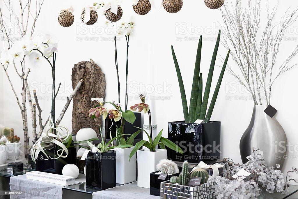 Florist shop. Color Image royalty-free stock photo